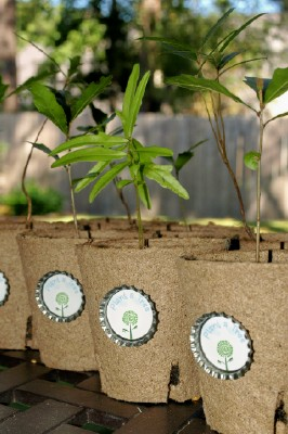 Seedling Trees